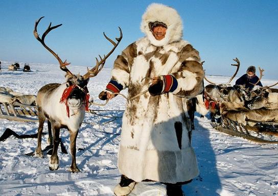 арктика работа есть и для детей
