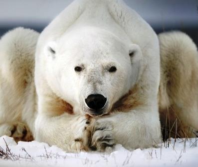 вакансии на газопровод русская арктика до 2034