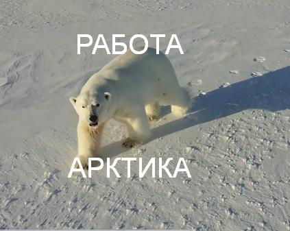 ссылка телеграмма работа Арктика